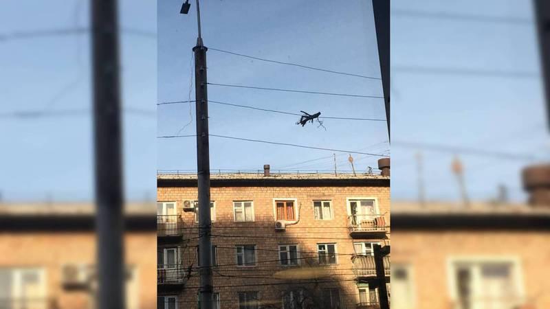 Бишкекчанин просит убрать ветку, висящую на кабеле на Киевской-Уметалиева (фото)