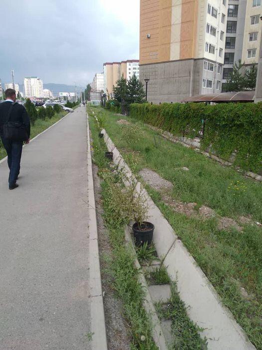 «Бишкекзеленхоз» производит полив зеленых насаждений по ул.Тыналиева с помощью поливомоечной машины