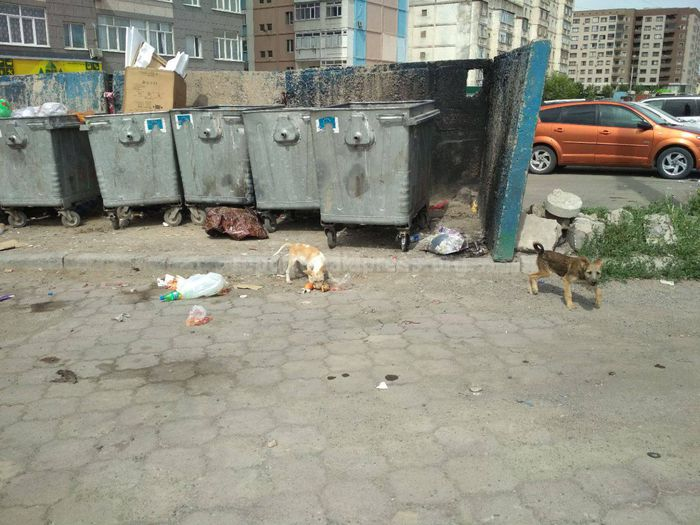 Житель столицы обеспокоен сансостоянием мусорной площадки на Тыналиева-Масалиева (фото, видео)