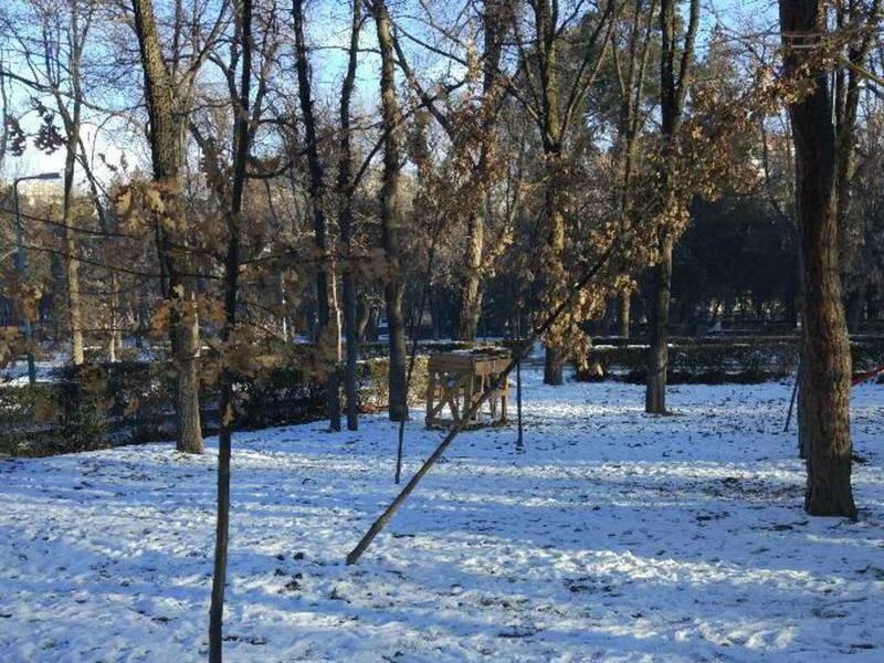 В сквере им.Тоголока Молдо упало недавно посаженное дерево, - бишкекчанин (фото)