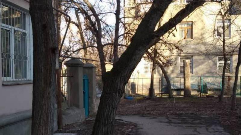 На ул.Льва Толстого во дворе дома №16 аварийные деревья уберут завтра, -мэрия