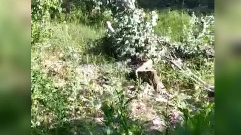 На улице Шопокова идет вырубка деревьев. Законно ли?