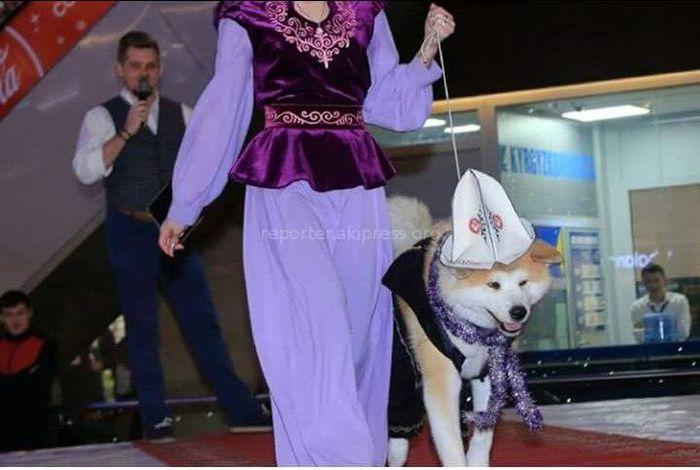 Фото - Собака в Ак калпаке. Пользователи соцсетей кыргызстанского сегмента недовольны презентацией на выставке