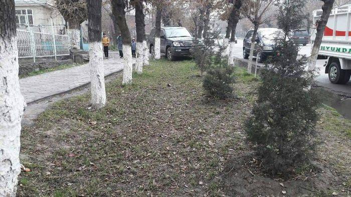 Ошто мыйзамды сыйлабаган айдоочунун жолтандабасы тротуарда арчалардын арасында токтоп турат <i>(фото)</i>