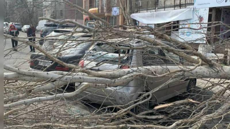 На Ибраимова—Боконбаева из-за сильного ветра упало дерево, повреждены 2 машины