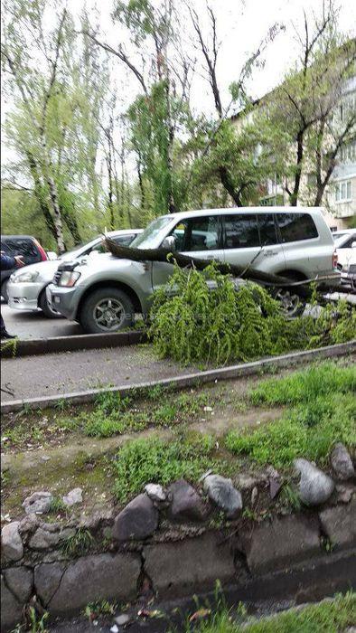 В Бишкеке на участке ул.Элебаева большая ветка упала на машину (фото)