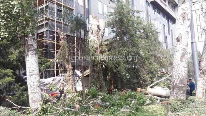 По проспекту Манаса вырубают деревья для нового отеля <i>(фото)</i>