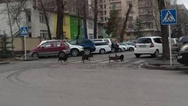 Собаки переходят дорогу по правилам (фото и видео)