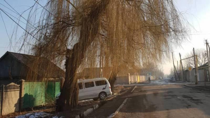 На Абаканская-Белгородская два дерева и столб относятся к г.Бишкек, - Сокулукский акимиат