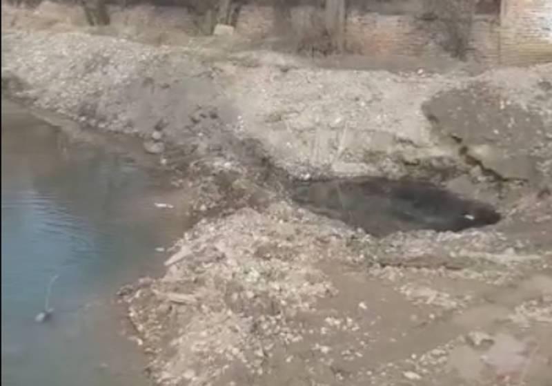 В Бишкеке на проспекте Жибек-Жолу в реке Ала-Арча мазут, - житель (видео)