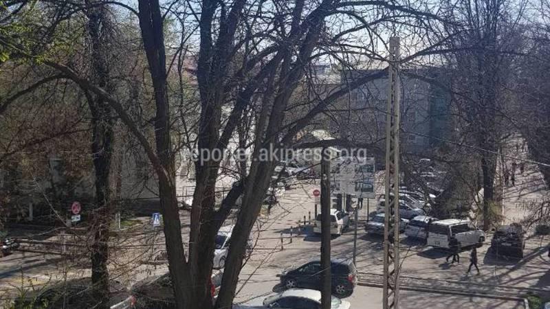 В Бишкеке на Московской-Тоголок Молдо сухое дерево может упасть на дорогу (фото)