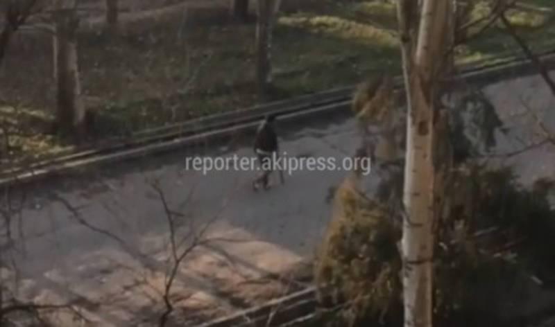 Житель Бишкека интересуется, законно ли вели отстрел собак на Чуй-7 Апреля? (видео)