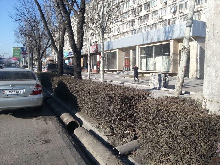 До каких пор будет истребляться зеленый фонд Бишкека? - горожанин
