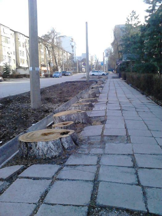 Читательница Замира недовольна вырубкой деревьев на ул.Тыныстанова (фото)