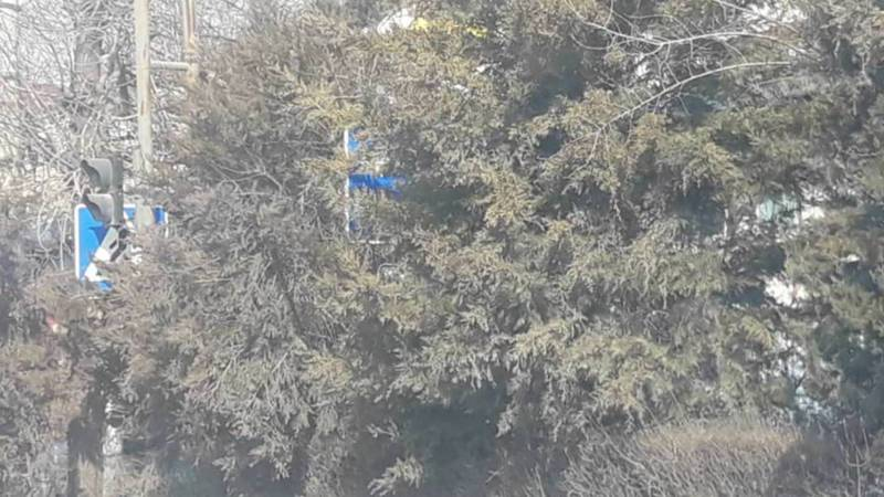 На улице Курманжан Датки дорожные знаки скрыты за деревьями. Фото