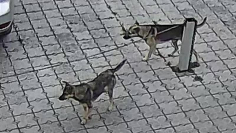 В парке имени Ата-Тюрка много бродячих собак. Фото очевидца