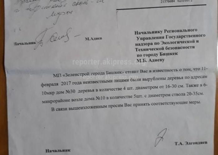 Ответственного за вырубку деревьев в 6 мкр выявить не удалось, - мэрия Бишкека