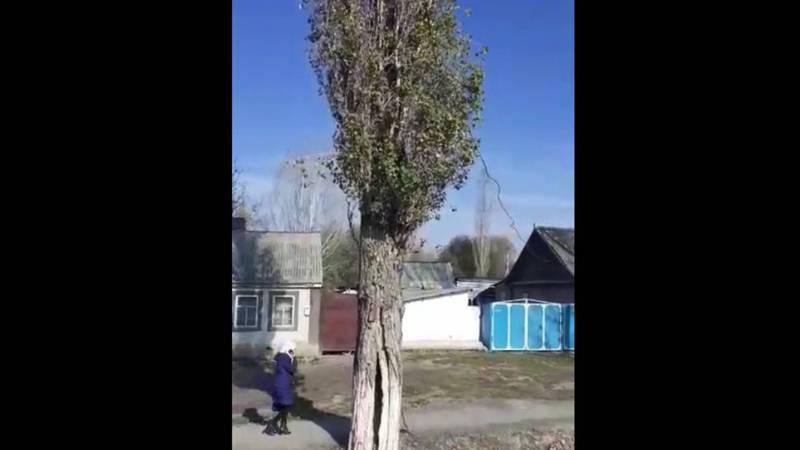 Жители села Панфилов просят убрать старые деревья