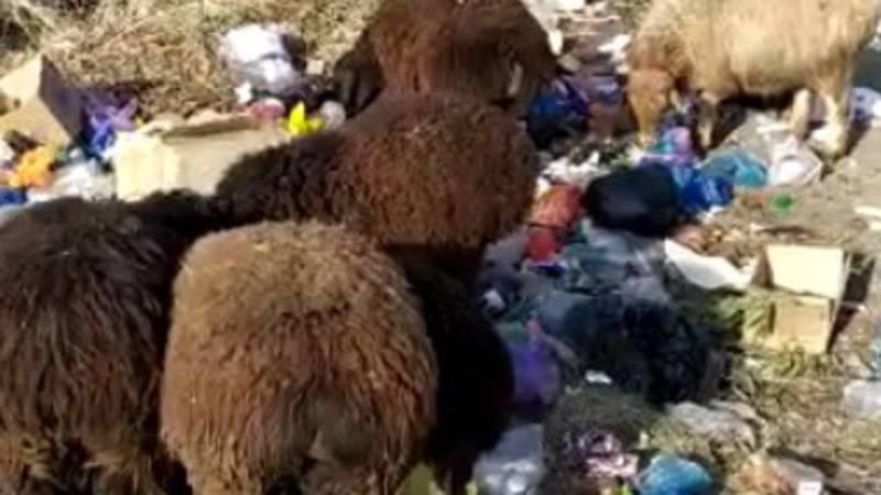 На улице Асаналиева в городе Кызыл-Кия постоянно сжигают мусор (видео)