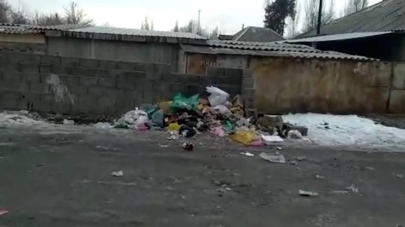 В селе Беловодское из-за отсутствия мусорных контейнеров жители выбрасывают мусор на улицу. Видео