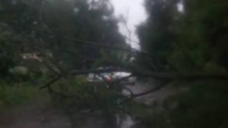 В Канте дерево упало на дорогу, едва не придавив проезжающую машину, - очевидец. Видео