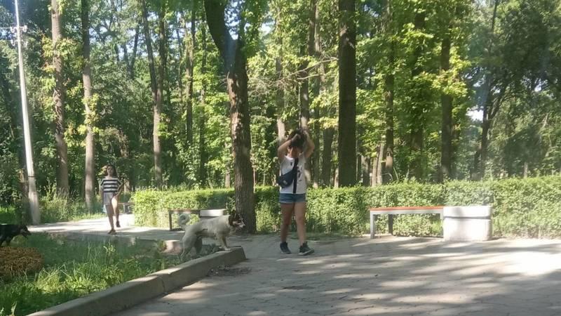 Горожанин жалуется на выгул собак без намордников в сквере «Физкультурный». Фото
