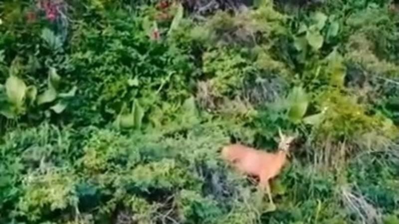 Красота природы ущелья Тар-Суу в Чон-Кемине. Видео