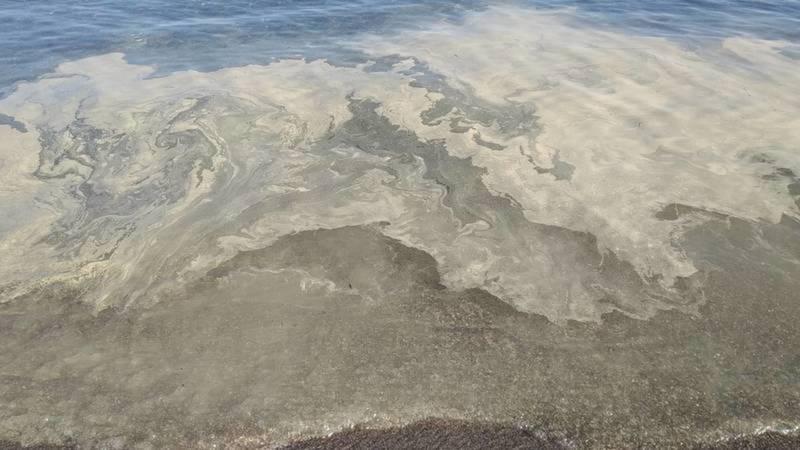 Желтые масляные пятна в озере Иссык-Куль - это пыльца хвойных деревьев и облепихи, - Госсанэпиднадзор