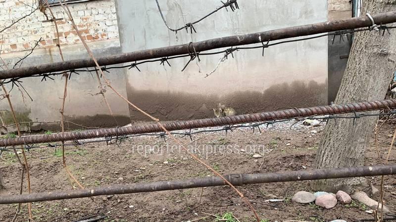 В Кара-Балте в Квартале ковровщиков опасный забор, - горожанин. Фото