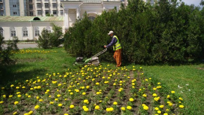 Сотрудники «Бишкекзеленхоза» ухаживают за зелеными насаждениями на ул.Ажибек Баатыра (фото)