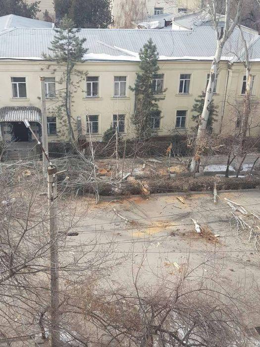В Бишкеке на участке ул.Тыныстанова идет вырубка деревьев (фото)