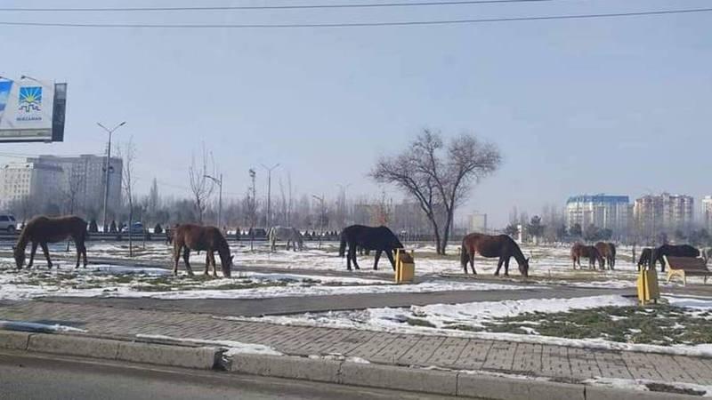 Табун лошадей на улицах Бишкека. Лошади теперь гуляют в парке Ынтымак.Фото