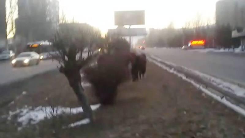 Когда примут меры в отношении хозяина лошадей, которые постоянно пасутся в центре города?
