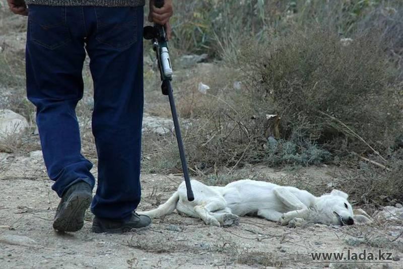 Правда ли, что в Бишкеке идет отстрел собак из-за коронавируса? - бишкекчанин