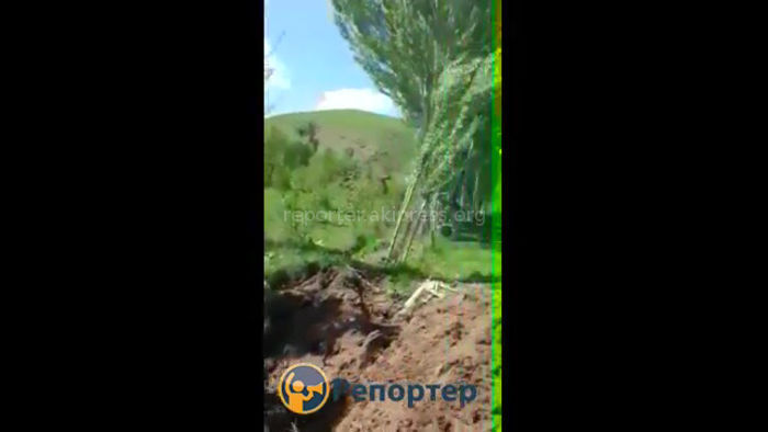 Чүйдүн Кара-Ой айылында бак-дарактар кыйылып жатат, - окурман <i>(видео)</i>