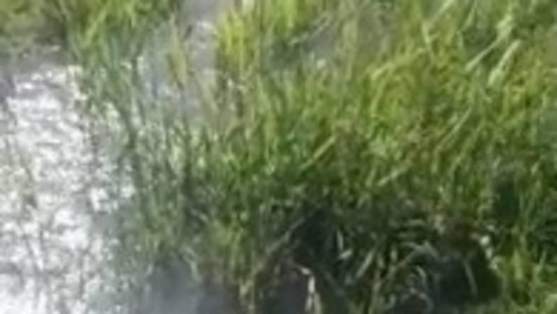 В селе Кок-Добо вода из канала топит поля. Видео