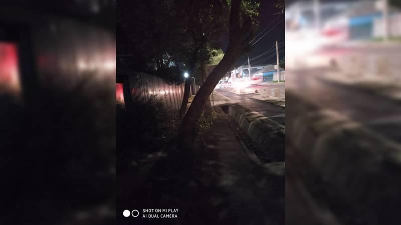 Покосившееся дерево по ул.Гагарина мешает прохожим. Фото
