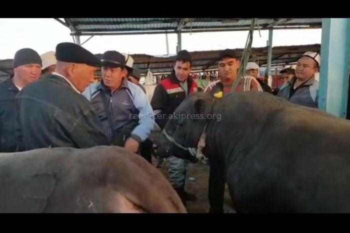 Видео — На скотном рынке в Жалал-Абаде продают бычка за 200 тыс. сомов