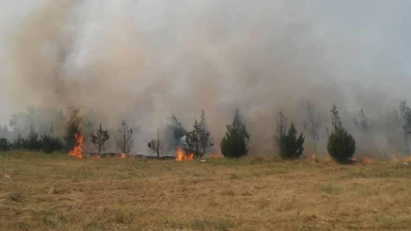 В парке «Ынтымак» сгорело сухотравие и саженцы на территории 1 га, - МЧС. Фото