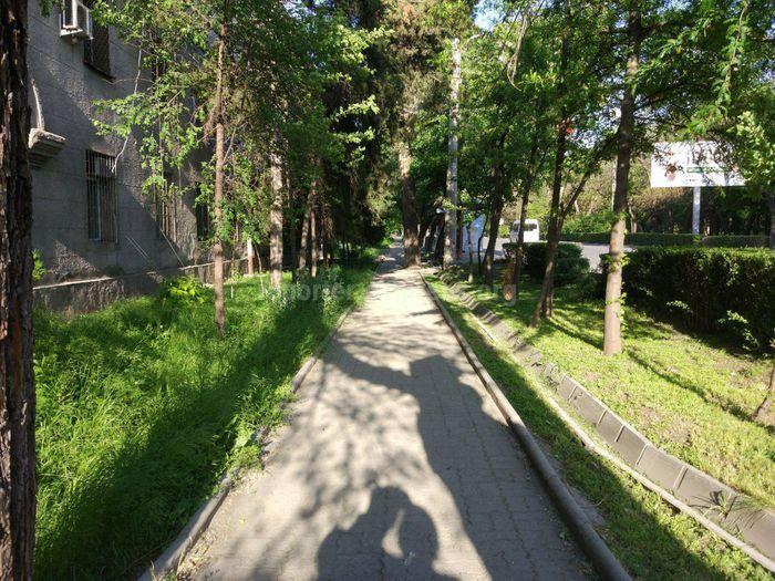 Мэрия Бишкека о траве вдоль тротуара ул.Московской: Правая сторона тротуара принадлежит ТСЖ