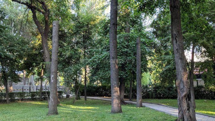 «Бишкекзеленхоз» провел санобрезку сухостойных деревьев в Дубовом парке