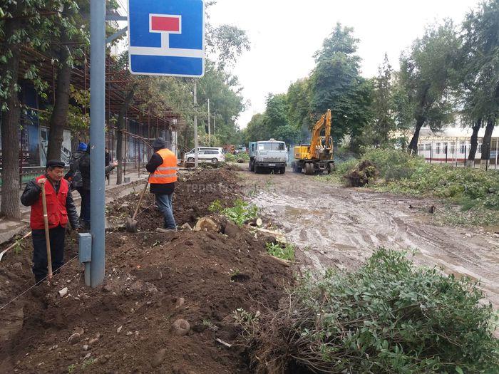 На Тыныстанова-Киевской идет вырубка деревьев, - бишкекчанин <i>(фото)</i>