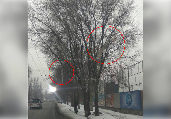 Читатель сообщает о мусоре, висящем на дереве