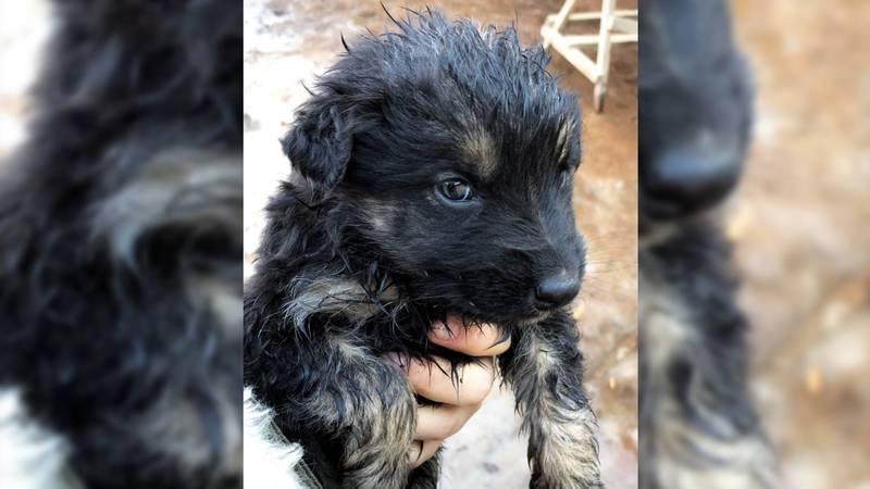Трогательное видео о том, как спасли новорожденного щенка, застрявшего под бетонной плитой
