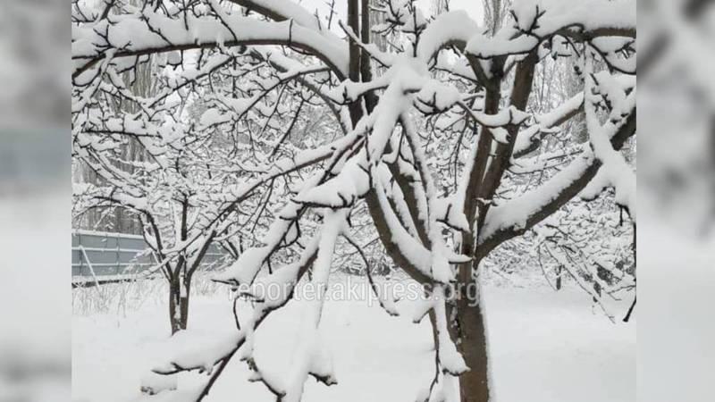 Жители Таласа прислали фото выпавшего снега