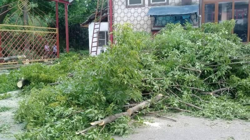Из-за сильного ветра дерево упало на ворота больницы в Узгене, - очевидец. Фото