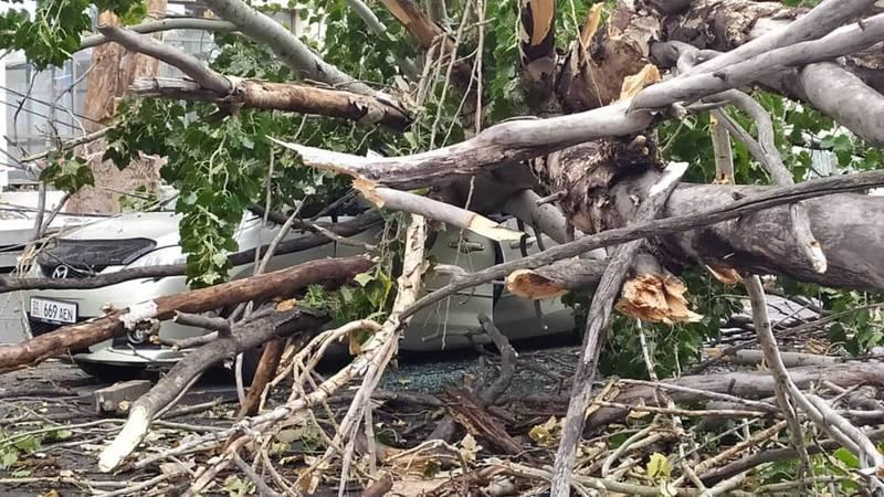 На Боконбаева-Турусбекова на машину упало дерево, растущее на территории «Кап Строй Кей Джи»