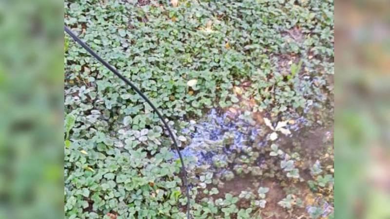 В сквере на Московской - Тоголок Молдо лежит оголенный электрический провод (фото)