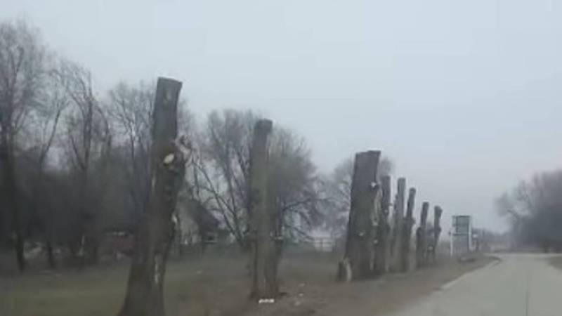 Возле СЭЗ Бишкека вдоль дороги срубили все деревья. Видео