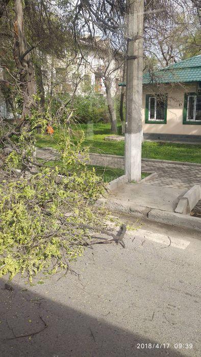 На ул.Толстого в Бишкеке ветка упала на проезжую часть (фото)